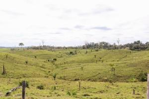 Post-apocalyptic Amazonia_Andrés Ruzo
