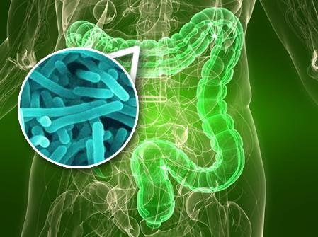 The Effect of Antibiotics on the Gut Microbiota