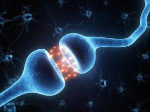 A synapse: Photo by Sebastian Kaulitzki/Shutterstock